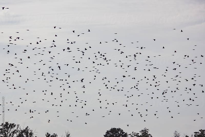 Flying birds by luis felix for Stocksy United