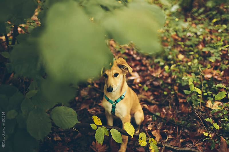 Young Dog Portrait Autumn by HEX. for Stocksy United