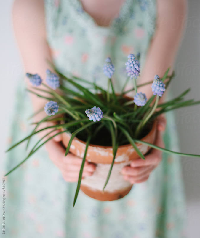 A little girl holding a pot of Grape Hyacinths by Helen Rushbrook for Stocksy United