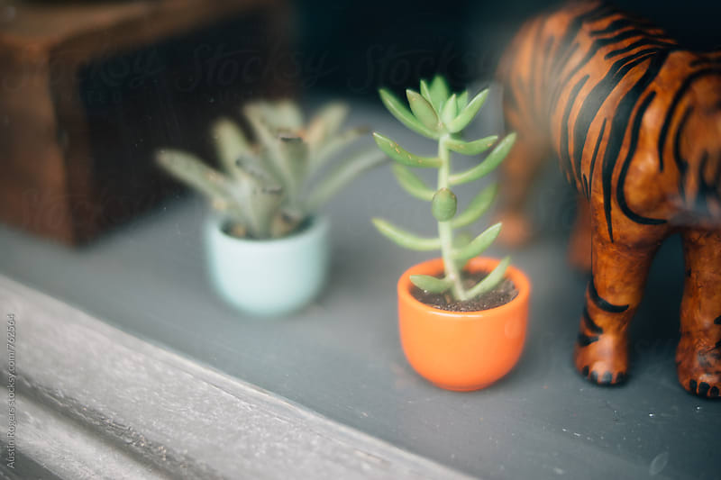 Window Display with Plants by Austin Rogers for Stocksy United
