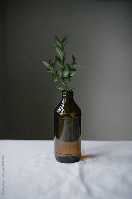 Simple greenery boxwood in brown beer bottle vase for holiday decor by Daring Wanderer for Stocksy United