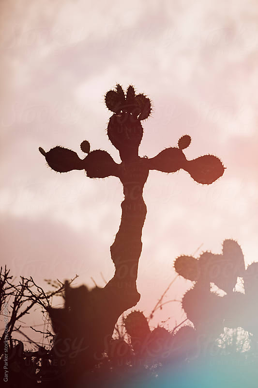 A cactus shaped like a cross with a red wash of color by Gary Parker for Stocksy United