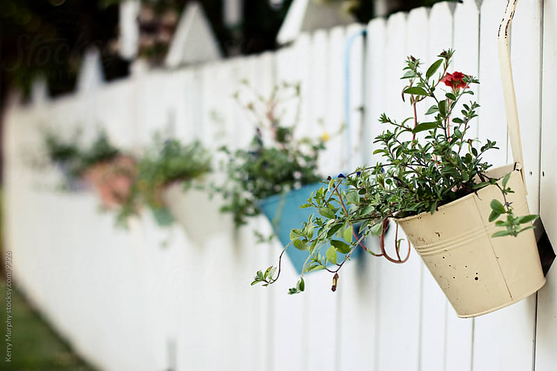 Potted plants on a white picket fence by Kerry Murphy for Stocksy United