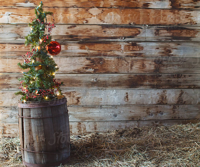 An alpine tree decorated with lights, berry garland and ornament sits in an old wooden barrel by Tana Teel for Stocksy United