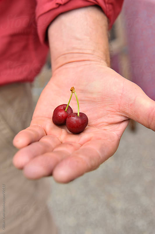 cherry in the hand by Gillian Vann for Stocksy United