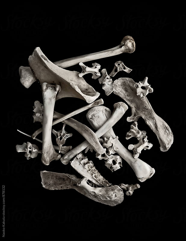 dried bones arranged on black background by Naoko Kakuta for Stocksy United