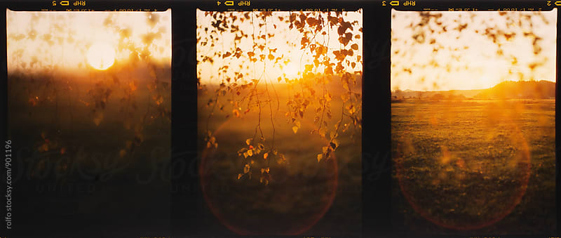 Film triple shot of branch with leaves at sunset by rolfo for Stocksy United