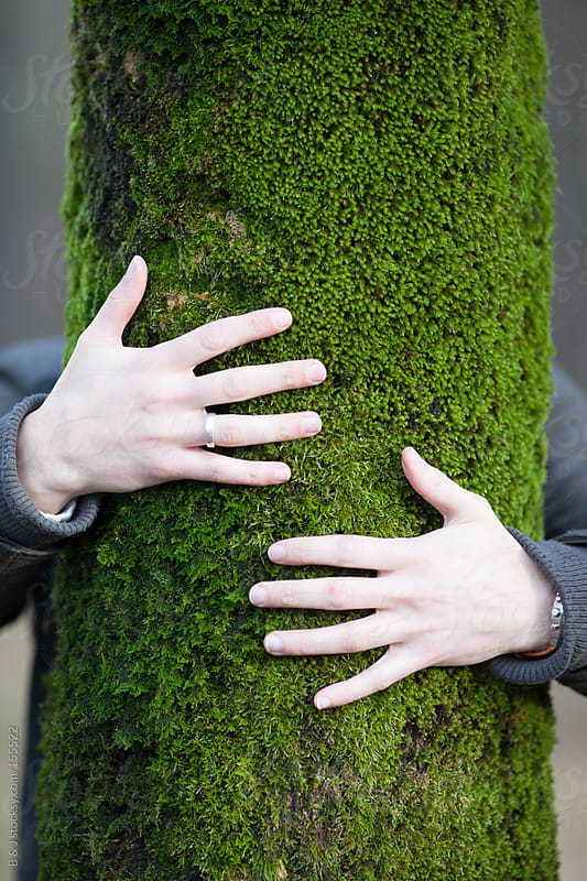 hands hugging tree by B & J for Stocksy United
