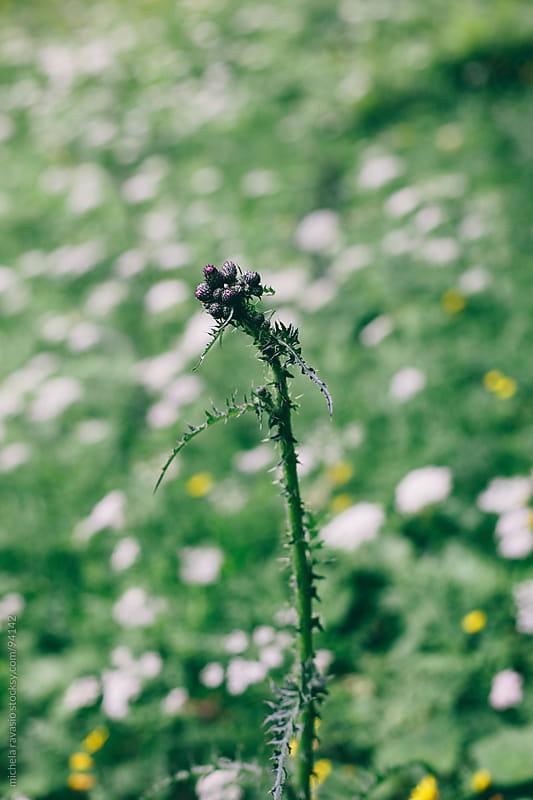 Wild flower by michela ravasio for Stocksy United