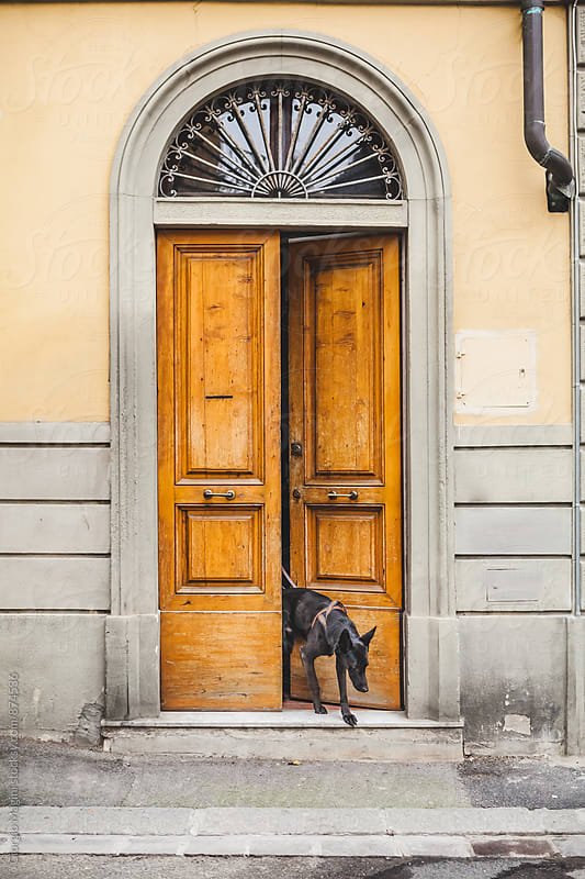 Black Dog Exiting from an Open Door on the Street by Giorgio Magini for Stocksy United