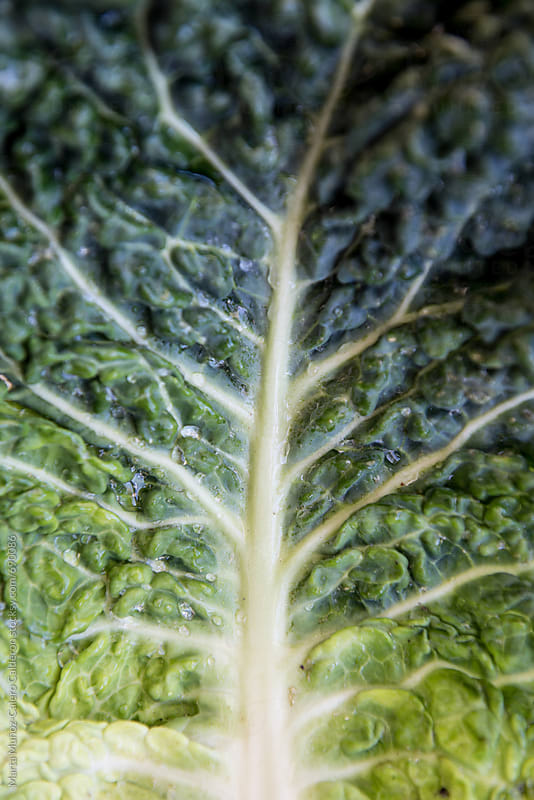 Kale leaf close up by Marta Muñoz-Calero Calderon for Stocksy United
