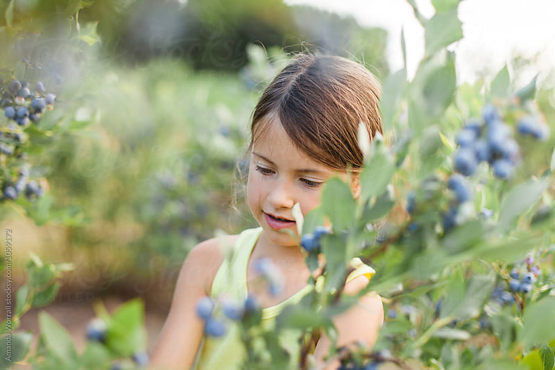 Girl picking blueberries at a farm by Amanda Worrall for Stocksy United