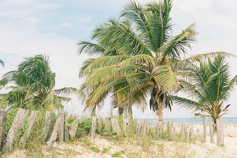 Wooden posts form a sloppy barrier / fence on a beach in the Caribbean by Joey Pasco for Stocksy United