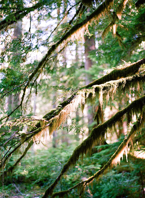 Moss on branches by Ali Harper for Stocksy United