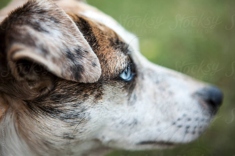 Mixed race dog in close up profile by Lior + Lone for Stocksy United