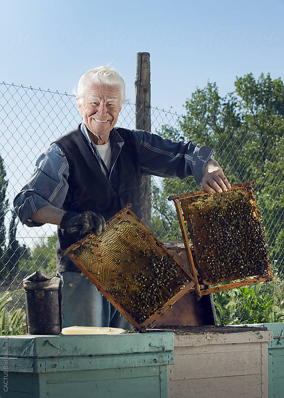 Senior beekeeper showing his bees. by Blai Baules for Stocksy United