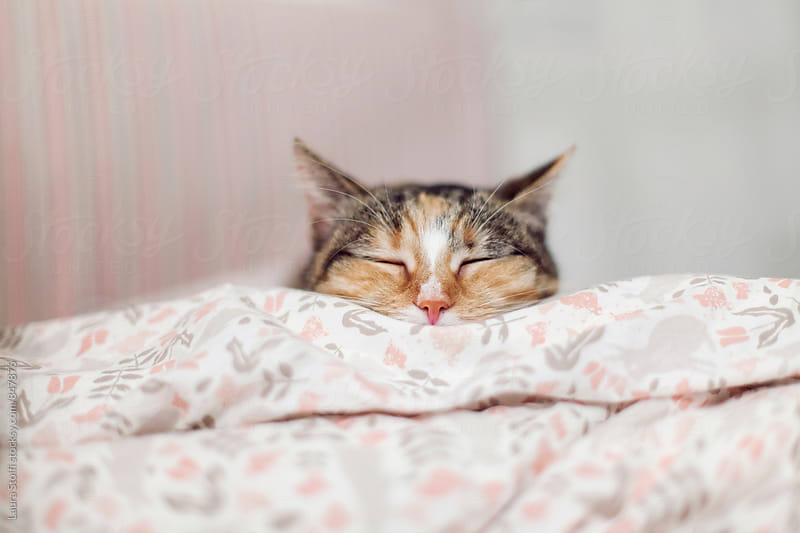 retail of sleeping cat's head peering out of pink duvet on girl's bed by Laura Stolfi for Stocksy United