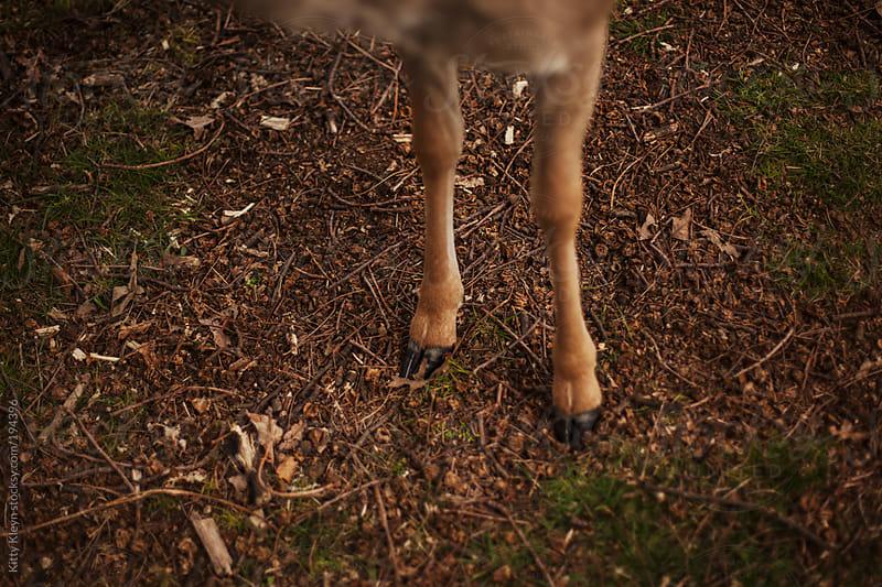 Deer feet by Kitty Kleyn for Stocksy United