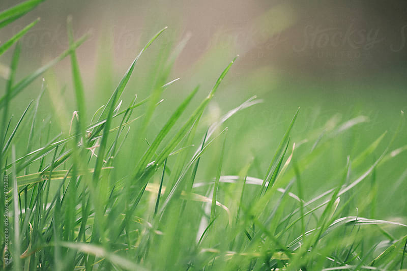 Grass by sally anscombe for Stocksy United
