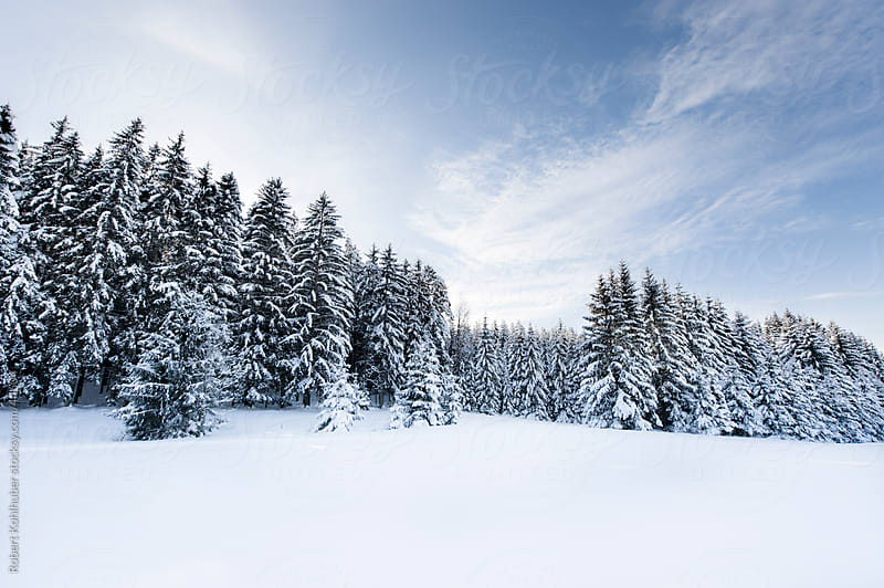 Forest in winter landscape by Robert Kohlhuber for Stocksy United