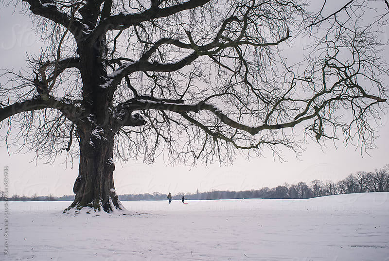A father and son sledging in the snow with a large tree in the foreground by Darren Seamark for Stocksy United
