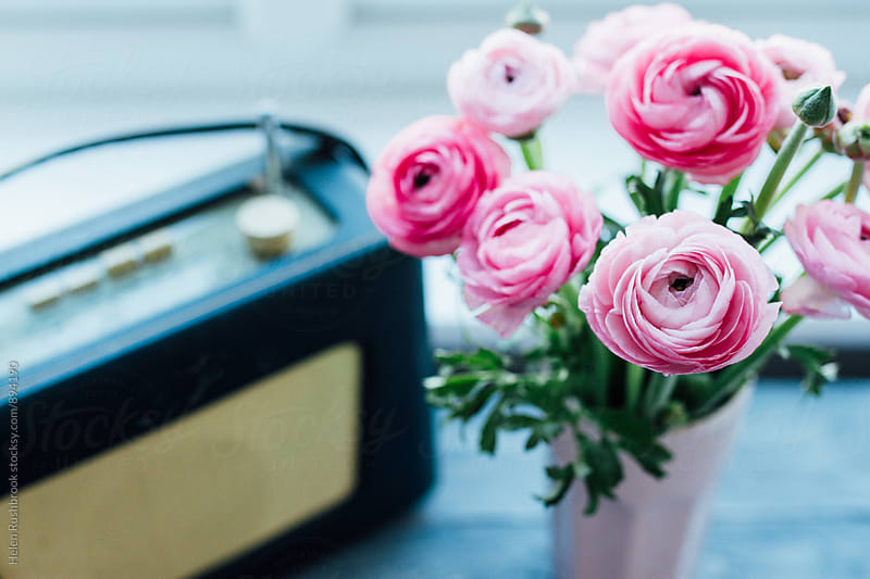 Pink Ranunculus by Helen Rushbrook for Stocksy United