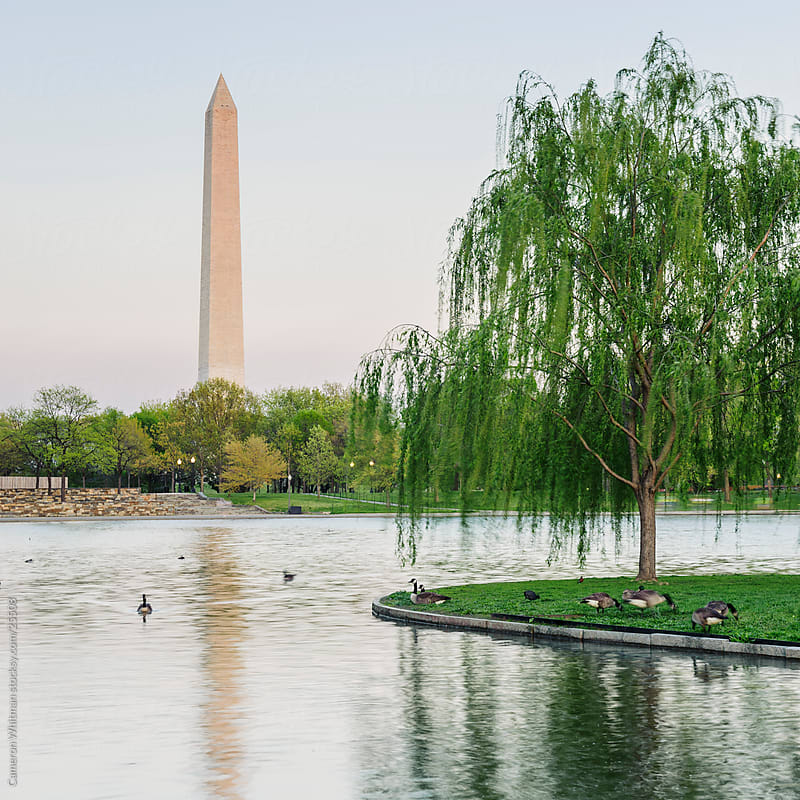 Washington Monument from Constitution Gardens by Cameron Whitman for Stocksy United