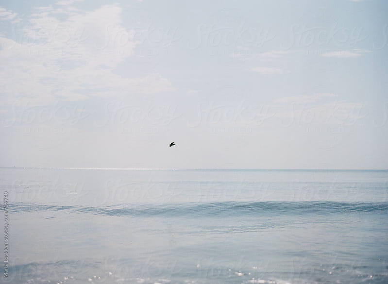 Pelican flying along the water by Marta Locklear for Stocksy United