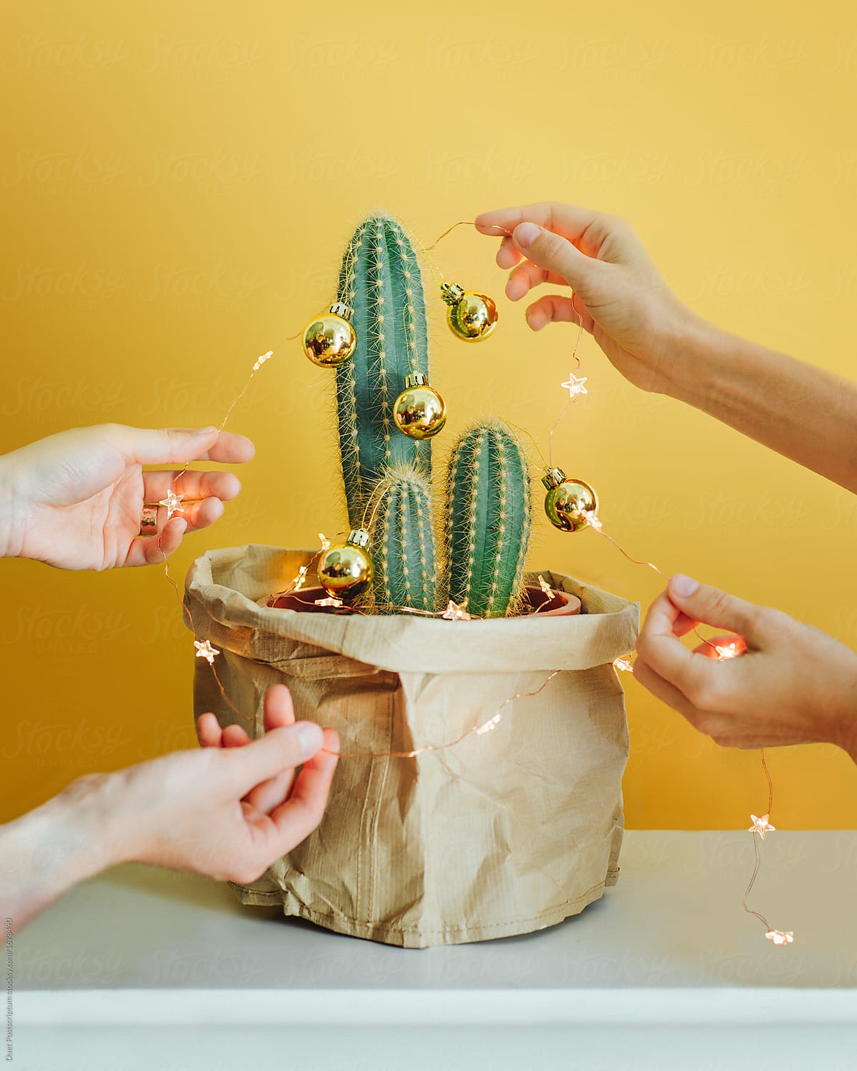 people decorating cactus with christmas garland by duet postscriptum for stocksy united - Decorating Cactus For Christmas