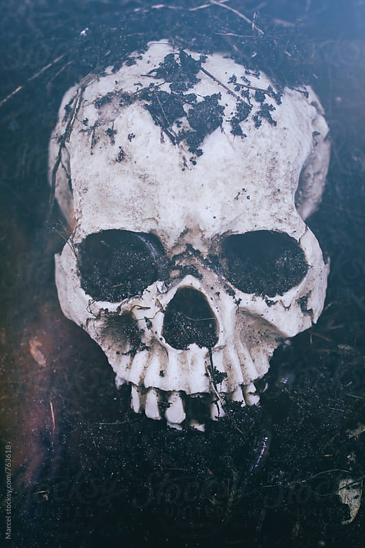 Dug up skull with earth and worms by Marcel for Stocksy United