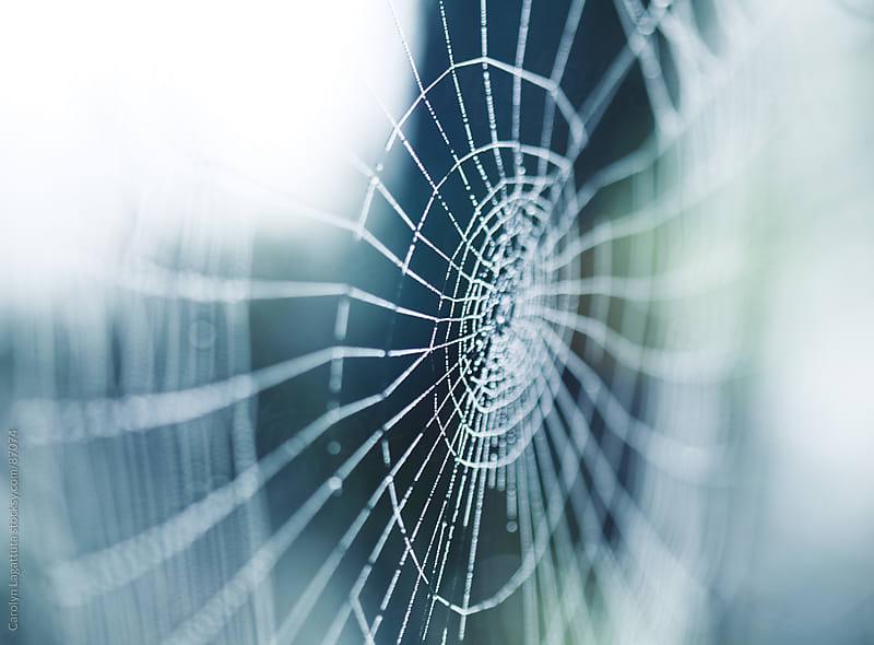 Dewy web in the morning light with a blue-green background by Carolyn Lagattuta for Stocksy United