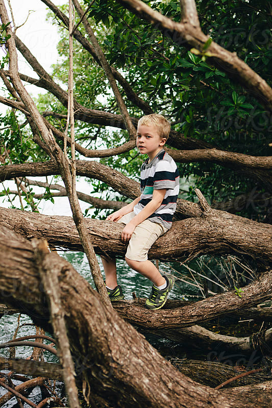 Boy sitting in a tree by Stephen Morris for Stocksy United