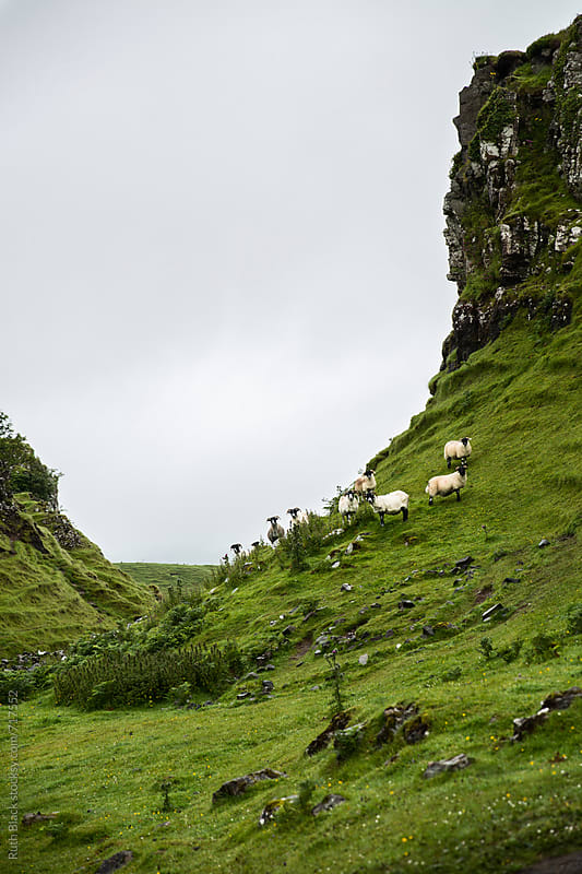 Sheep on the Isle of Skye, Scotland, UK by Ruth Black for Stocksy United