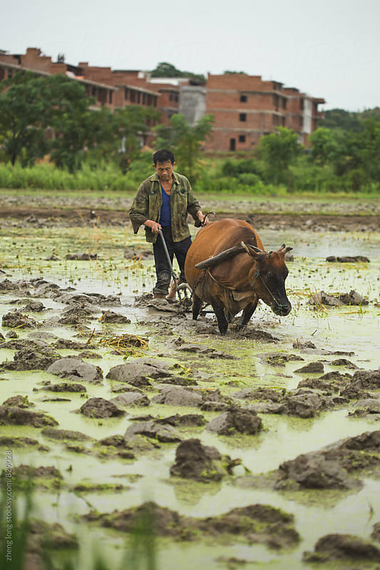 Farmer is ploughing by zheng long for Stocksy United