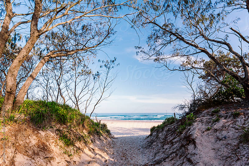 Exploring the dunes at Tallow Beach Byron Bay.   by Image Supply Co for Stocksy United