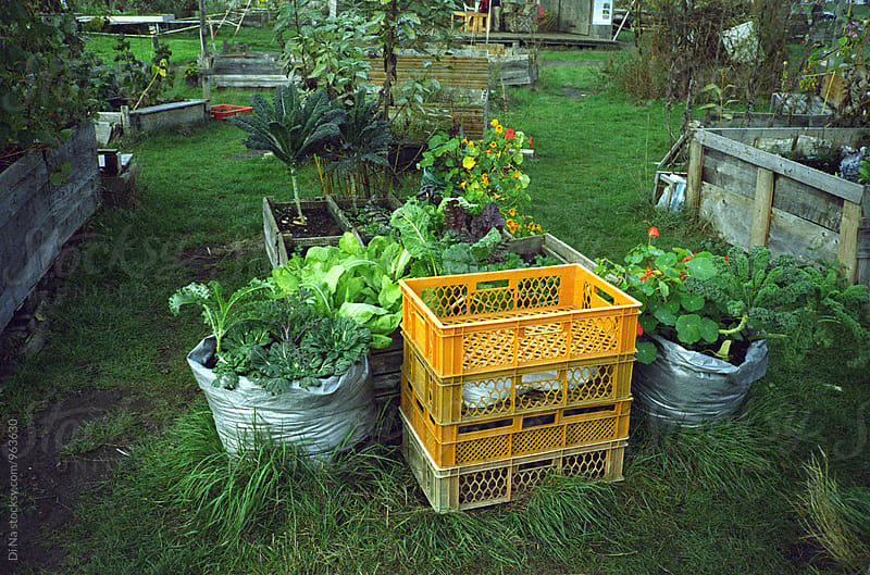 Mobile Vegetable Garden by Di Na for Stocksy United