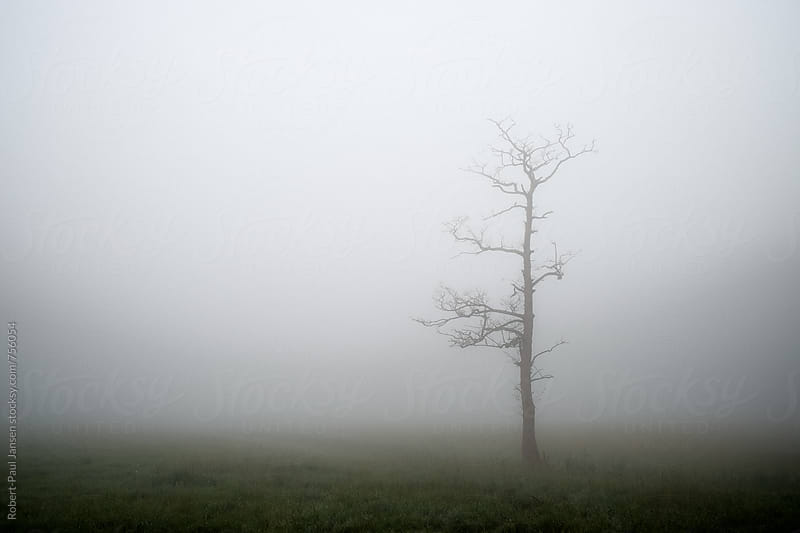 Solitary tree in mist by Robert-Paul Jansen for Stocksy United