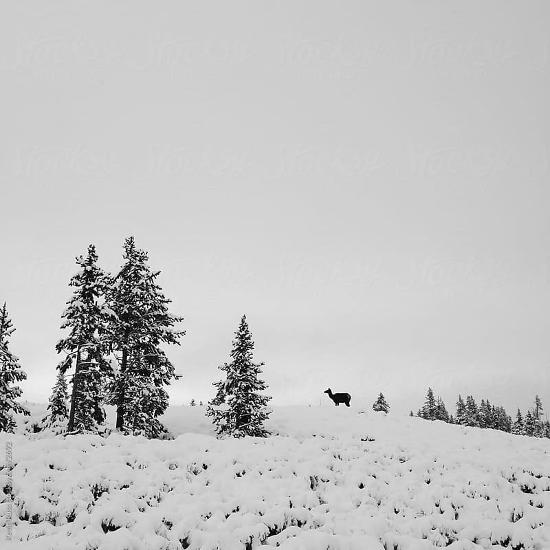 Yellowstone Snowy Winter Elk by Kevin Russ for Stocksy United
