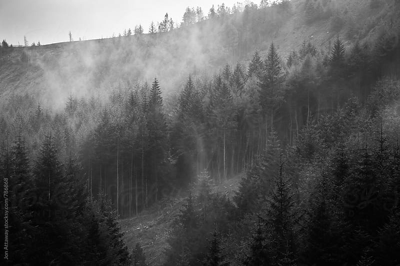 Mist rising from a forest by Jon Attaway for Stocksy United