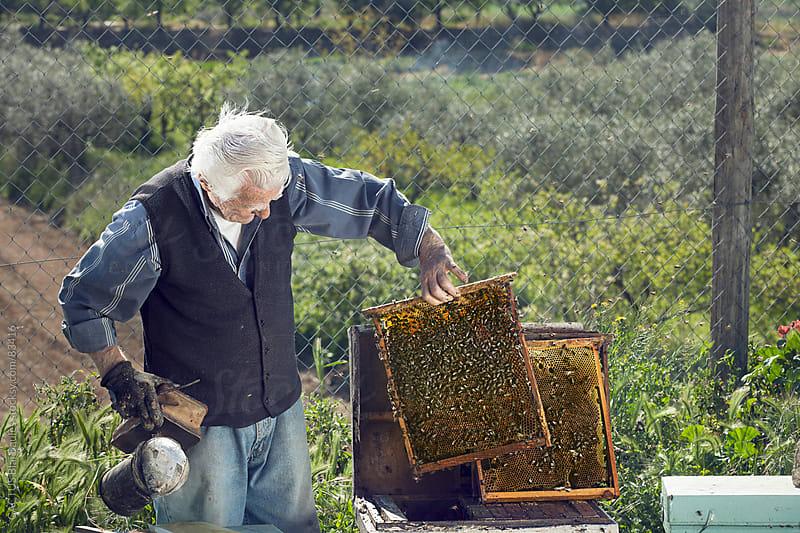 Senior beekeeper by CACTUS Blai Baules for Stocksy United