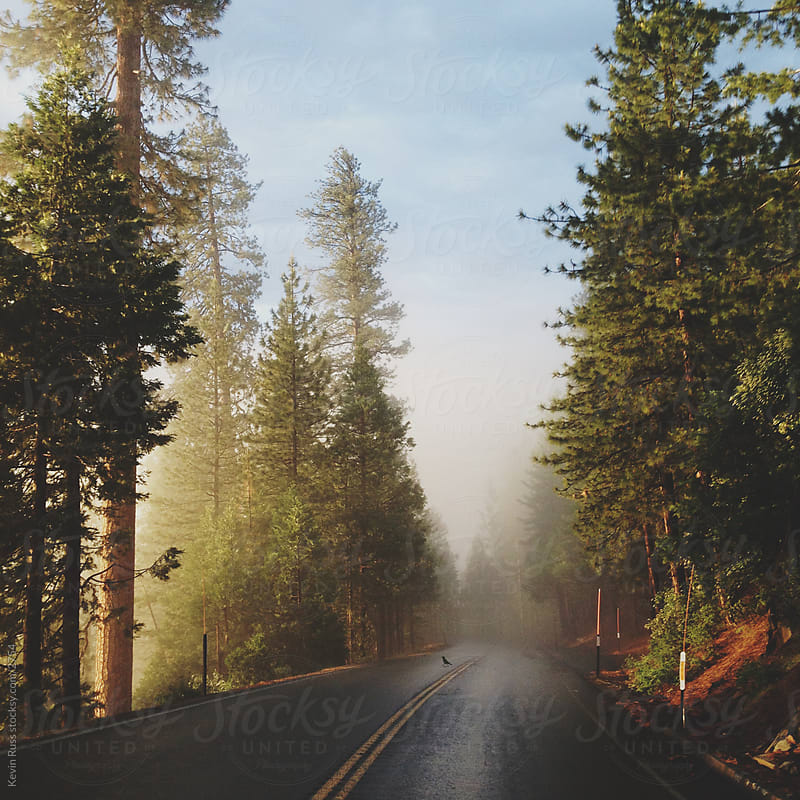 Sunny Fog Road by Kevin Russ for Stocksy United