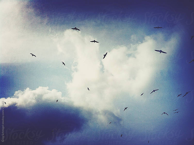 Birds, clouds and blue sky by Greg Schmigel for Stocksy United