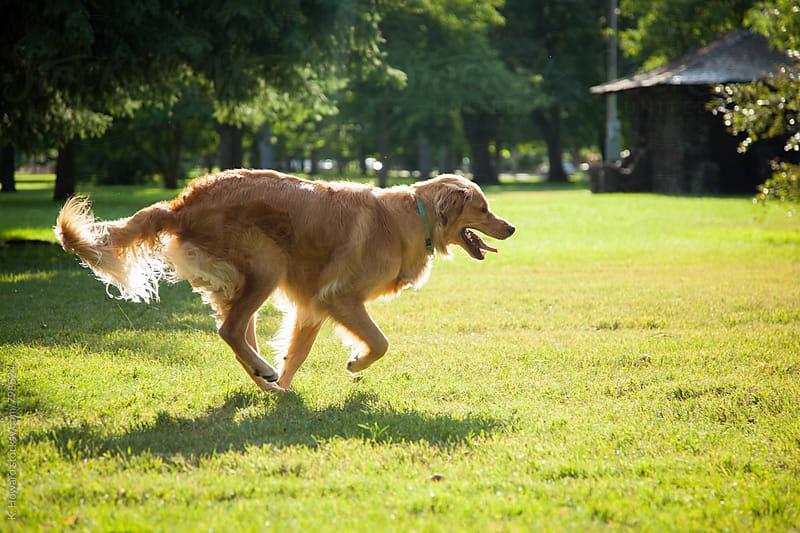 Running Dog. by K. Howard for Stocksy United