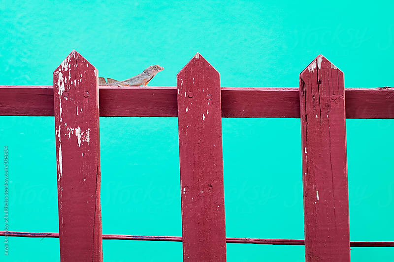Lizard on a red fence against a green wall by anya brewley schultheiss for Stocksy United
