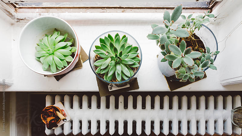 Succulents on windowsill by James Jackson for Stocksy United