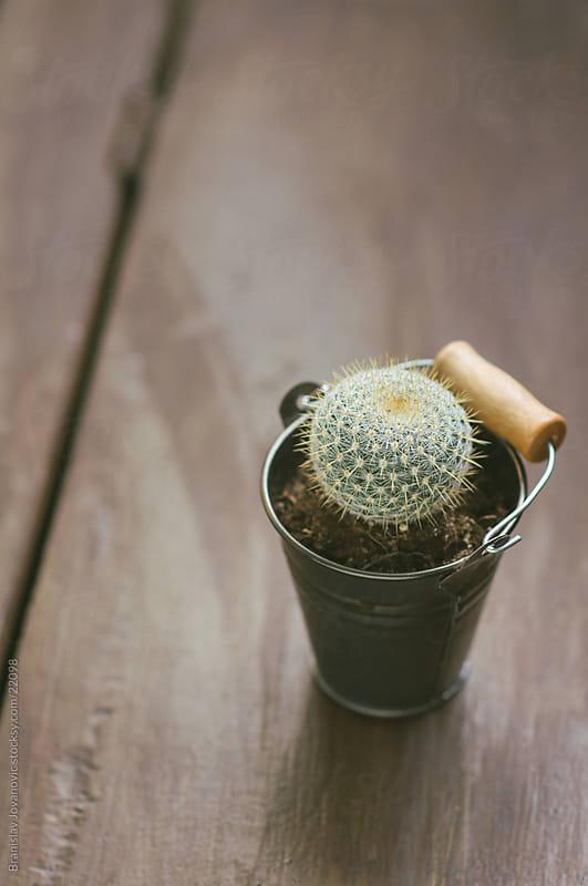 Cactus by Brkati Krokodil for Stocksy United