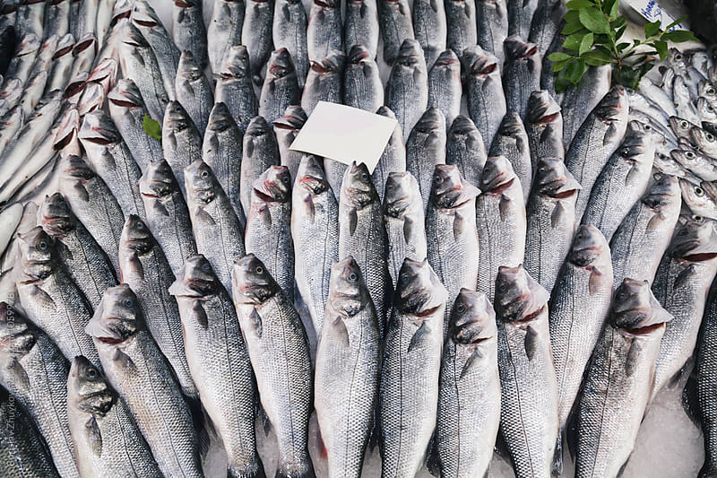 Fresh fish sea bass at the fish market by Borislav Zhuykov for Stocksy United