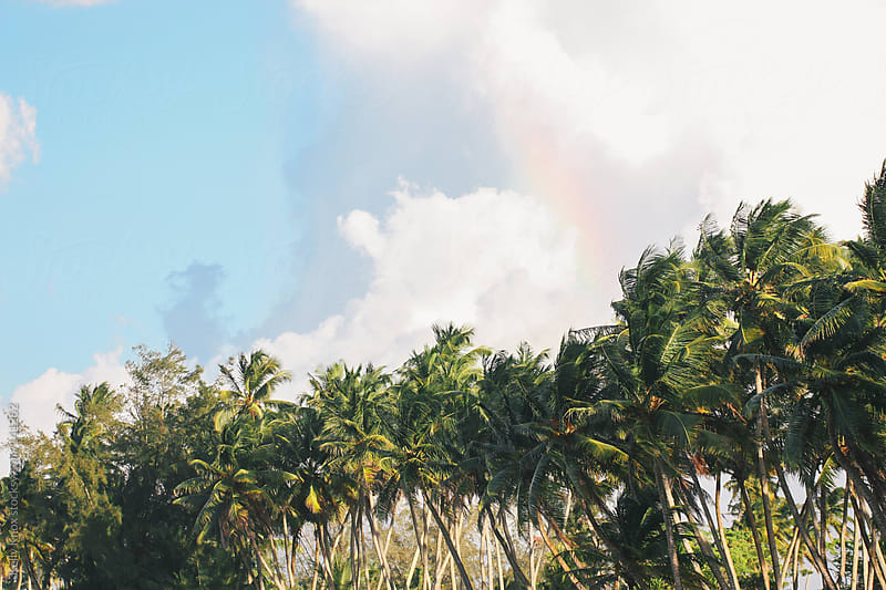 rainbow above palm trees by Kelly Knox for Stocksy United
