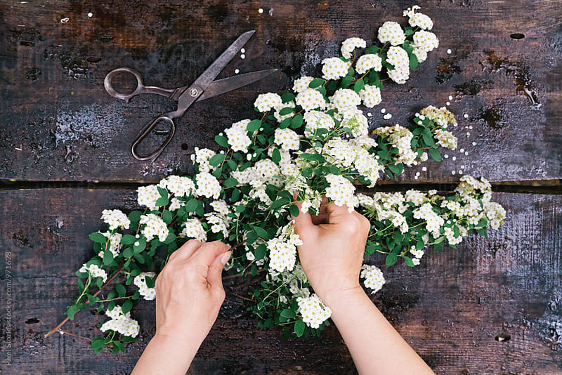 Woman arranging Spirea branch by Pixel Stories for Stocksy United