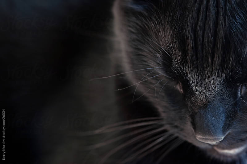 Macro of black cat sleeping by Kerry Murphy for Stocksy United